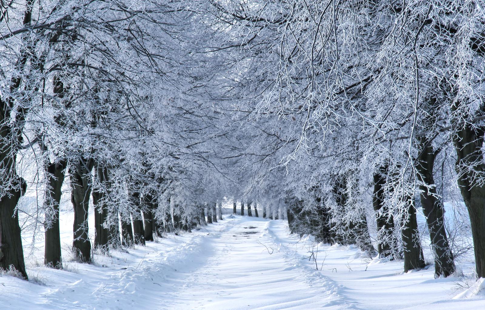 Hyde Park Winter Wonderland - Official Site